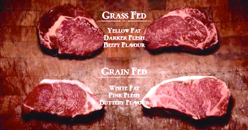 Grass-Grain-Fed-Beef
